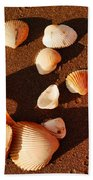 Beach Shells Hand Towel