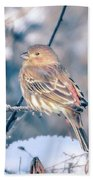 House Finch Tiny Bird Perched On A Tree Bath Towel