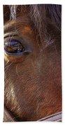 Morgan Horse Bath Sheet