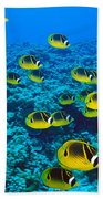 Raccoon Butterflyfish Bath Towel