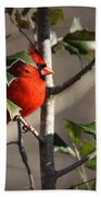 Img_0001 - Northern Cardinal Bath Towel