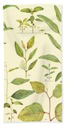 Vintage Botanical Illustration Bath Towel