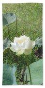 White Lotus Flower Flower Lotus Nature Summer Green Plant Blossom Asian Hand Towel
