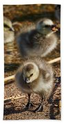 Barnacle Goose Bath Towel