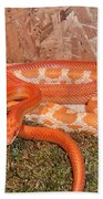 Corn Snake Bath Towel