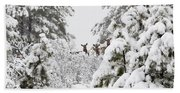Elk In Deep Snow In The Pike National Forest Hand Towel