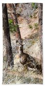 Mule Deer In The Pike National Forest Of Colorado Bath Towel
