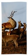 Red Deer In The Highlands Hand Towel
