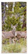 Mule Deer In The Pike National Forest Of Colorado Bath Towel