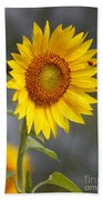 #933 D958 Best Of Friends Colby Farm Sunflowers Newbury Massachusetts Bath Towel