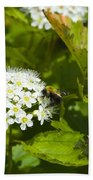 A Bee And A Fly Meet On A Flower Bath Towel