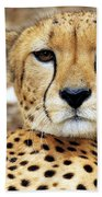 A Cheetah's Portrait Bath Towel