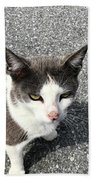 A Friendly Barn Cat Hand Towel