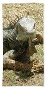 A Glaring Common Iguana On Aruba's Wild Side Bath Towel