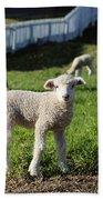 A Longwool Lamb Bath Towel