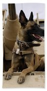 A Military Working Dog Sits On A U.s Bath Towel