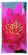 A Red And Yellow Water Lily Flower Bath Towel