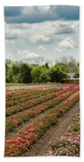 A Summer Dream Of Roses Hand Towel