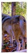 A Wolf Gazes Back Bath Towel
