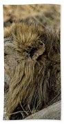 A Yawning Lion Bath Towel