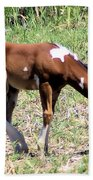 A Young Painted Colt  Bath Towel