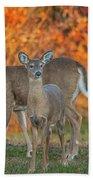 Acadia Deer Bath Towel
