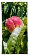 Adams County Peach Bath Towel