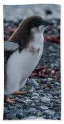 Adelie Penguin Chick Running Along Stony Beach Bath Towel