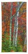 Adirondack Birches In Autumn Bath Towel