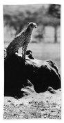 Africa: Cheetah Bath Towel