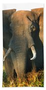 African Bull Elephant Bath Towel