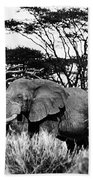 African Elephant Bath Towel