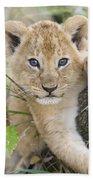 African Lion Cub Kenya Hand Towel by Suzi Eszterhas