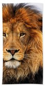 African Lion 1 Bath Towel