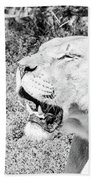 African Lion Bath Towel