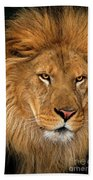 African Lion Panthera Leo Wildlife Rescue Bath Towel