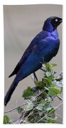 African White Eye Starling Hand Towel