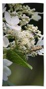 Ailanthus Webworm Moth 1 Bath Towel