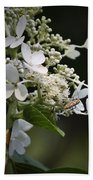 Ailanthus Webworm Moth 2 Bath Towel
