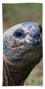 Aldabra Giant Tortoise's Portrait Bath Towel