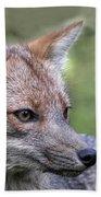 Alert Fox  Bath Towel