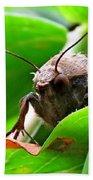 Alien Moth Bath Towel