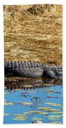 Alligator In The Sun Bath Towel