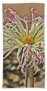 Allium Sunburst Pink/purple Tips On White Petals Yellow Center 2 10232017 Colorado  Hand Towel