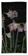 Amaryllis At Night After A Rain Hand Towel