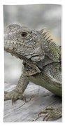 Amazing Posing Gray Iguana Perched On A Log Bath Towel