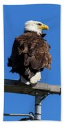 American Bald Eagle On Communication Tower Hand Towel