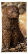 American Mink At Johnson Park Bath Towel by Ricky L Jones