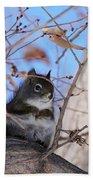 American Red Squirrel Bath Towel