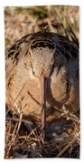 American Woodcock Head On Bath Towel